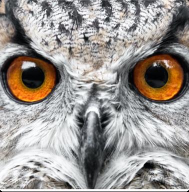 Closeup of the face of an owl.