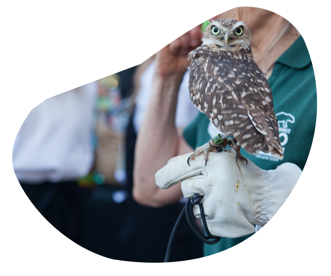 An owl sits perched on a zookeepers finger.