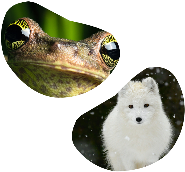 Image of a frog and a wolf.