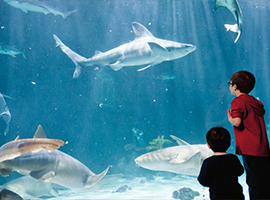 A group of children look at sea life inside the Point Defiance Zoo and Aquarium.