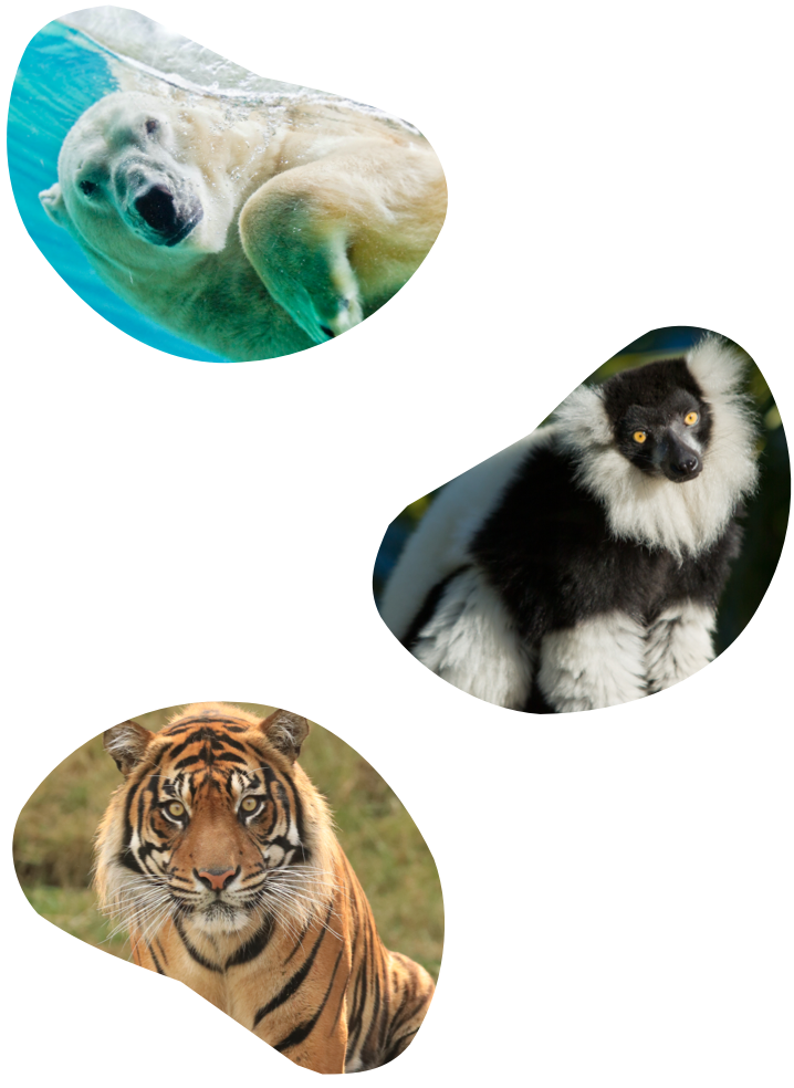 Three separate bean shaped images of a polar bear, a tiger, and a monkey.